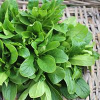 mache salade bio