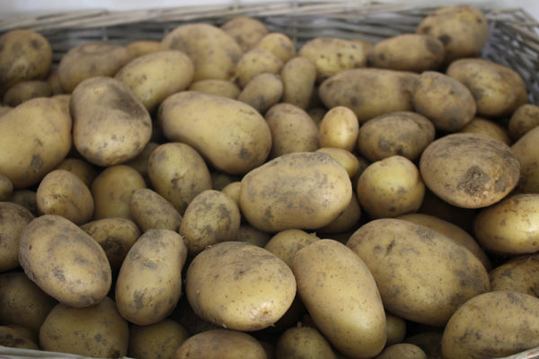 Pommes de terre nouvelles bio