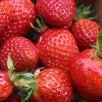 https://www.fermeducoin.fr/wp-content/uploads/2014/05/fraise-bio.jpg