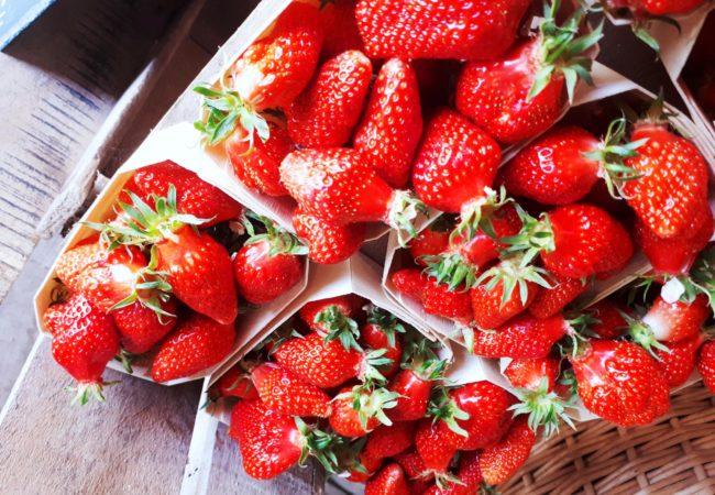 https://www.fermeducoin.fr/wp-content/uploads/2014/05/fraises2-scaled-650x450.jpg