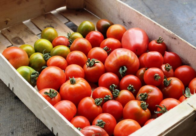 https://www.fermeducoin.fr/wp-content/uploads/2014/05/tomates-scaled-650x450.jpg