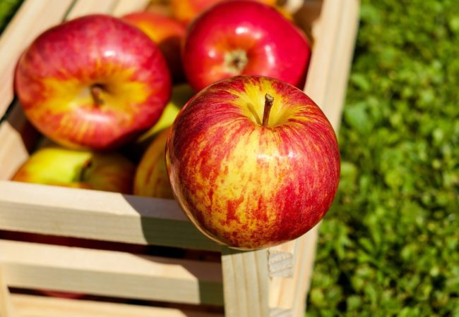 https://www.fermeducoin.fr/wp-content/uploads/2021/09/apple-1589874_1920-650x450.jpg